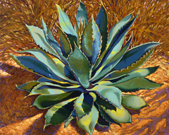 Agave with Grasses
